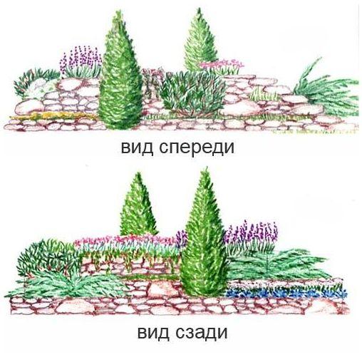 Рокарий - описание видов. Фото инструкция как посадить 92