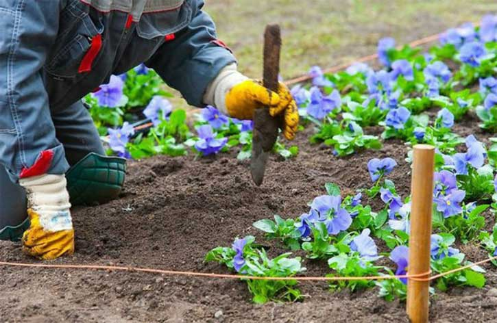 Когда в июне сажать цветы 288