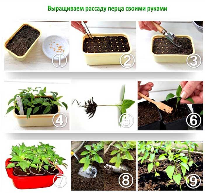 Как посадить семена на рассаду 465