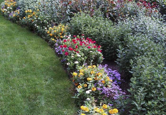 Какие цветы посадить с северо западной