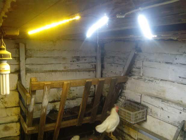 Помещение для цыплят в домашних условиях